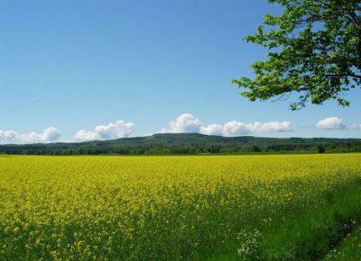 Ziemia rolna tylko dla rolnika