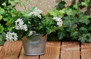 Jak dbać o kwiaty w mieszkaniu? Zasady dla początkujących