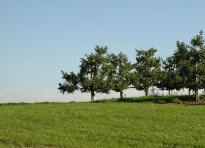 Wycinać czy nie wycinać? Nowe i nowsze zasady wycinki drzew